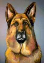 Retrato Troy